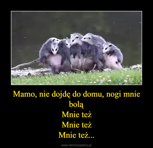 Mamo, nie dojdę do domu, nogi mnie boląMnie teżMnie teżMnie też... –