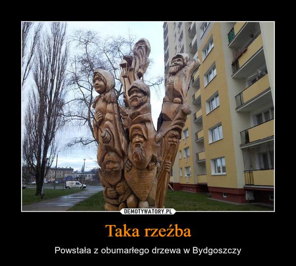 Taka rzeźba – Powstała z obumarłego drzewa w Bydgoszczy