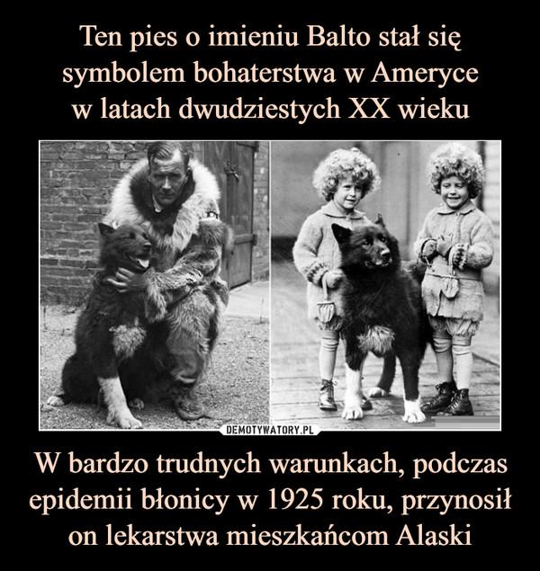 W bardzo trudnych warunkach, podczas epidemii błonicy w 1925 roku, przynosił on lekarstwa mieszkańcom Alaski –