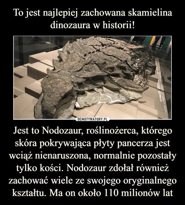 Jest to Nodozaur, roślinożerca, którego skóra pokrywająca płyty pancerza jest wciąż nienaruszona, normalnie pozostały tylko kości. Nodozaur zdołał również zachować wiele ze swojego oryginalnego kształtu. Ma on około 110 milionów lat –