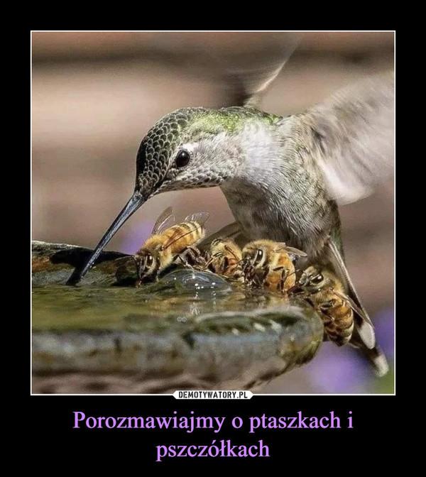 Porozmawiajmy o ptaszkach i pszczółkach –