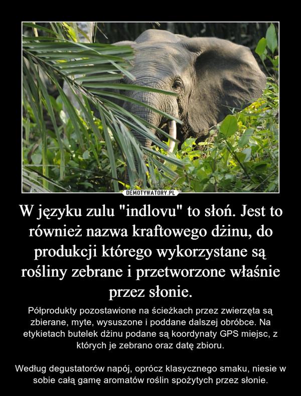 """W języku zulu """"indlovu"""" to słoń. Jest to również nazwa kraftowego dżinu, do produkcji którego wykorzystane są rośliny zebrane i przetworzone właśnie przez słonie. – Półprodukty pozostawione na ścieżkach przez zwierzęta są zbierane, myte, wysuszone i poddane dalszej obróbce. Na etykietach butelek dżinu podane są koordynaty GPS miejsc, z których je zebrano oraz datę zbioru.Według degustatorów napój, oprócz klasycznego smaku, niesie w sobie całą gamę aromatów roślin spożytych przez słonie."""
