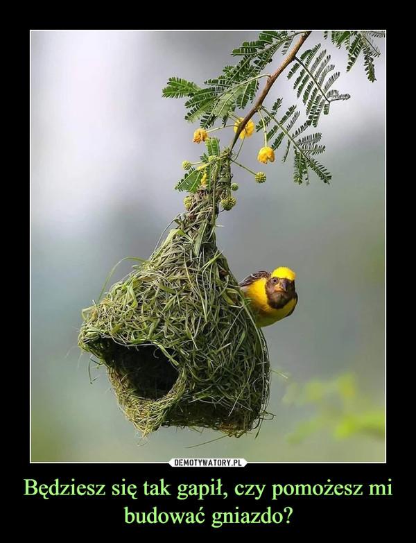 Będziesz się tak gapił, czy pomożesz mi budować gniazdo? –
