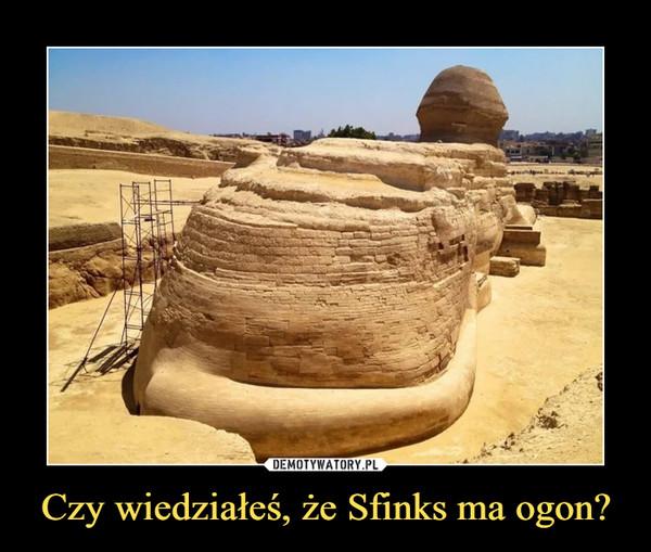 Czy wiedziałeś, że Sfinks ma ogon? –