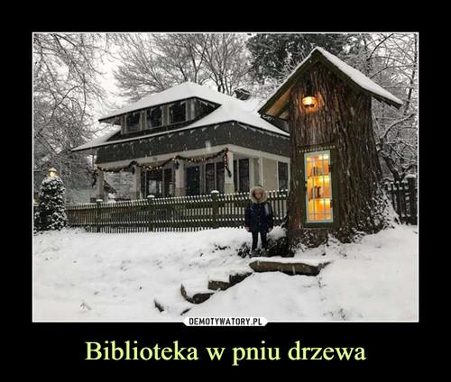 Biblioteka w pniu drzewa