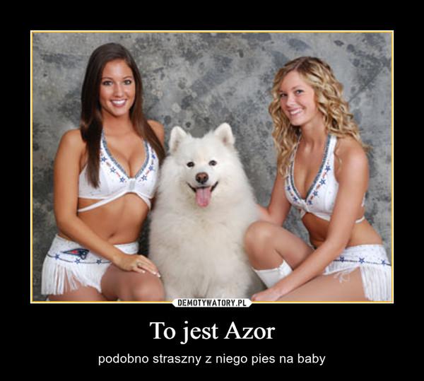 To jest Azor – podobno straszny z niego pies na baby