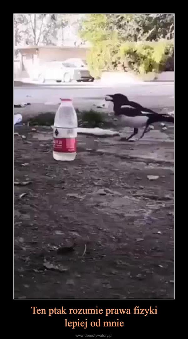 Ten ptak rozumie prawa fizykilepiej od mnie –