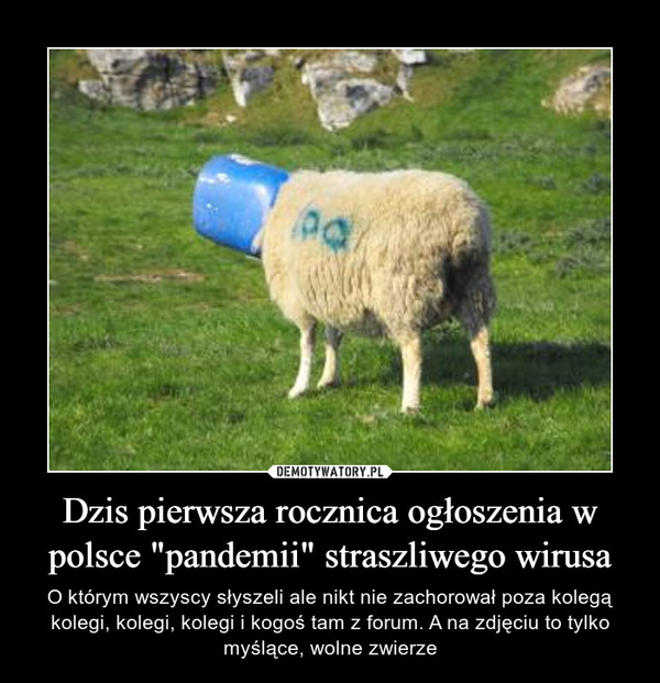 """Dzis pierwsza rocznica ogłoszenia w polsce """"pandemii"""" straszliwego wirusa – O którym wszyscy słyszeli ale nikt nie zachorował poza kolegą kolegi, kolegi, kolegi i kogoś tam z forum. A na zdjęciu to tylko myślące, wolne zwierze"""