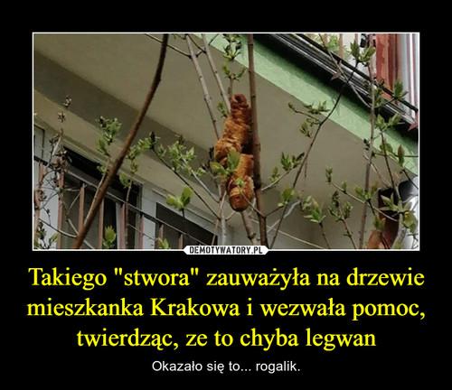 """Takiego """"stwora"""" zauważyła na drzewie mieszkanka Krakowa i wezwała pomoc, twierdząc, ze to chyba legwan"""