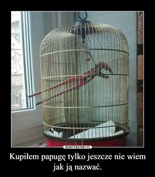 Kupiłem papugę tylko jeszcze nie wiem jak ją nazwać.