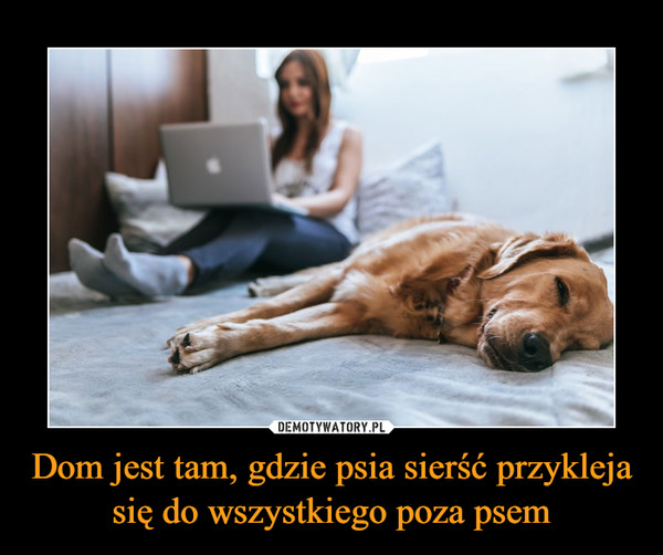 Dom jest tam, gdzie psia sierść przykleja się do wszystkiego poza psem –