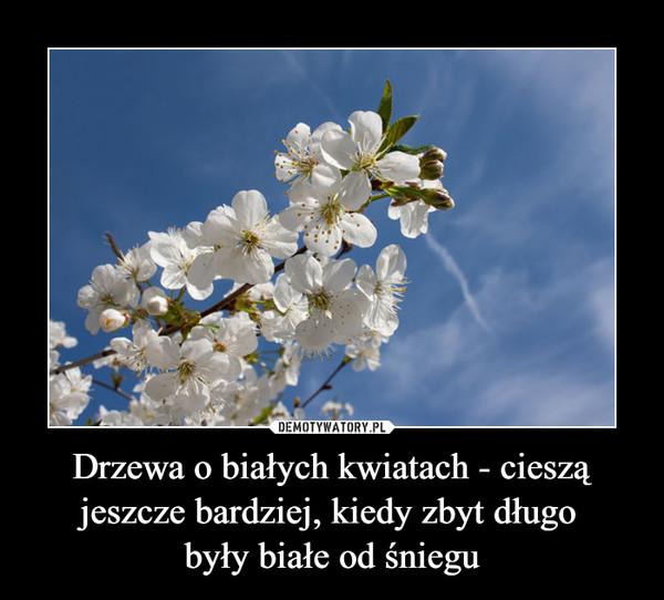 Drzewa o białych kwiatach - cieszą jeszcze bardziej, kiedy zbyt długo były białe od śniegu –