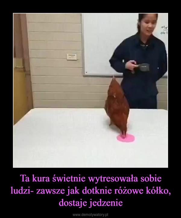 Ta kura świetnie wytresowała sobie ludzi- zawsze jak dotknie różowe kółko, dostaje jedzenie –