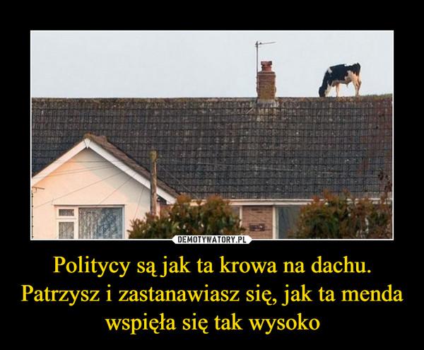 Politycy są jak ta krowa na dachu. Patrzysz i zastanawiasz się, jak ta menda wspięła się tak wysoko –