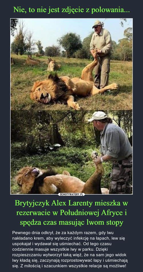 Nie, to nie jest zdjęcie z polowania... Brytyjczyk Alex Larenty mieszka w rezerwacie w Południowej Afryce i spędza czas masując lwom stopy