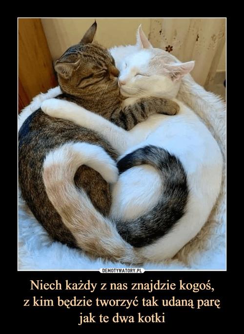 Niech każdy z nas znajdzie kogoś, z kim będzie tworzyć tak udaną parę jak te dwa kotki
