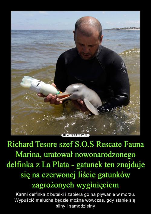 Richard Tesore szef S.O.S Rescate Fauna Marina, uratował nowonarodzonego delfinka z La Plata - gatunek ten znajduje się na czerwonej liście gatunków zagrożonych wyginięciem