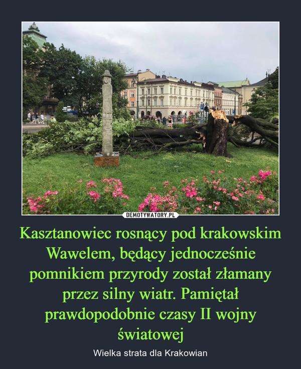 Kasztanowiec rosnący pod krakowskim Wawelem, będący jednocześnie pomnikiem przyrody został złamany przez silny wiatr. Pamiętał prawdopodobnie czasy II wojny światowej – Wielka strata dla Krakowian