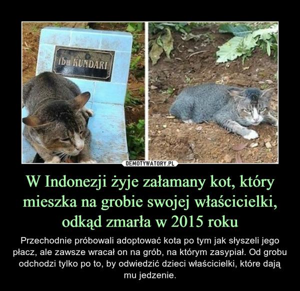 W Indonezji żyje załamany kot, który mieszka na grobie swojej właścicielki, odkąd zmarła w 2015 roku – Przechodnie próbowali adoptować kota po tym jak słyszeli jego płacz, ale zawsze wracał on na grób, na którym zasypiał. Od grobu odchodzi tylko po to, by odwiedzić dzieci właścicielki, które dają mu jedzenie.