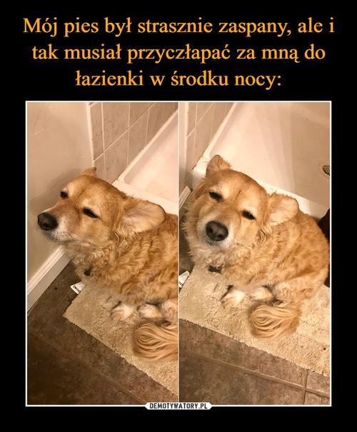Mój pies był strasznie zaspany, ale i tak musiał przyczłapać za mną do łazienki w środku nocy: