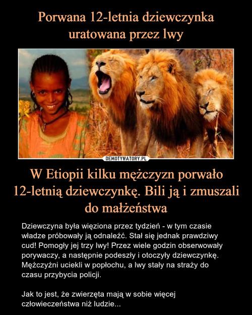 Porwana 12-letnia dziewczynka uratowana przez lwy W Etiopii kilku mężczyzn porwało 12-letnią dziewczynkę. Bili ją i zmuszali do małżeństwa
