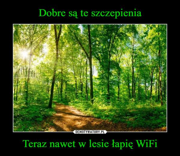 Teraz nawet w lesie łapię WiFi –
