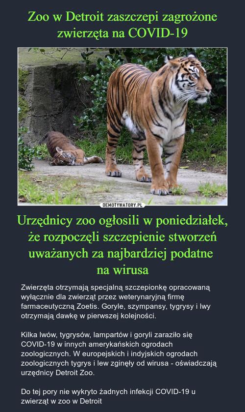 Zoo w Detroit zaszczepi zagrożone zwierzęta na COVID-19 Urzędnicy zoo ogłosili w poniedziałek, że rozpoczęli szczepienie stworzeń uważanych za najbardziej podatne  na wirusa