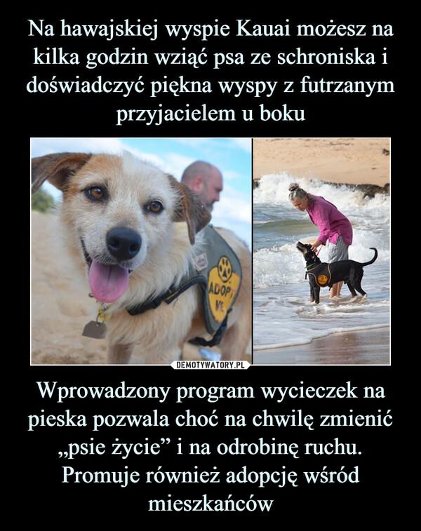 """Wprowadzony program wycieczek na pieska pozwala choć na chwilę zmienić """"psie życie"""" i na odrobinę ruchu. Promuje również adopcję wśród mieszkańców –"""