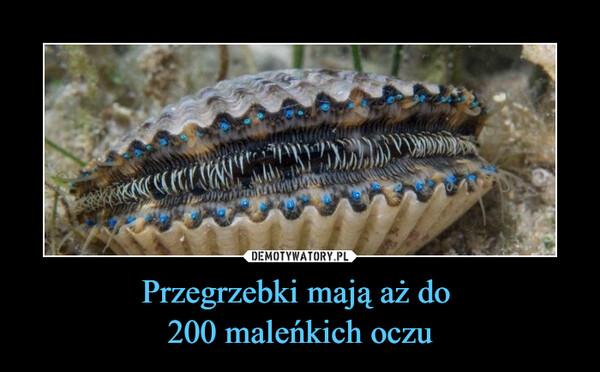 Przegrzebki mają aż do 200 maleńkich oczu –