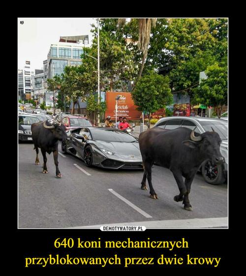 640 koni mechanicznych  przyblokowanych przez dwie krowy