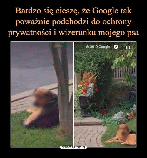 Bardzo się cieszę, że Google tak poważnie podchodzi do ochrony prywatności i wizerunku mojego psa
